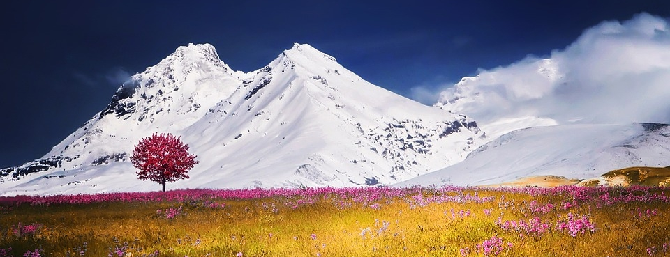 Beautiful all white mountains with pink flowered trees and field; donate to help others receive counseling in Parker